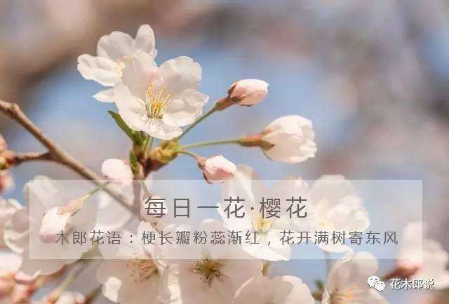 花木郎:过去一个月,我分享的观点到底在园艺上有什么用?