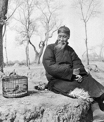 30年如一日,贵州养鸟人何正义的心怀若谷